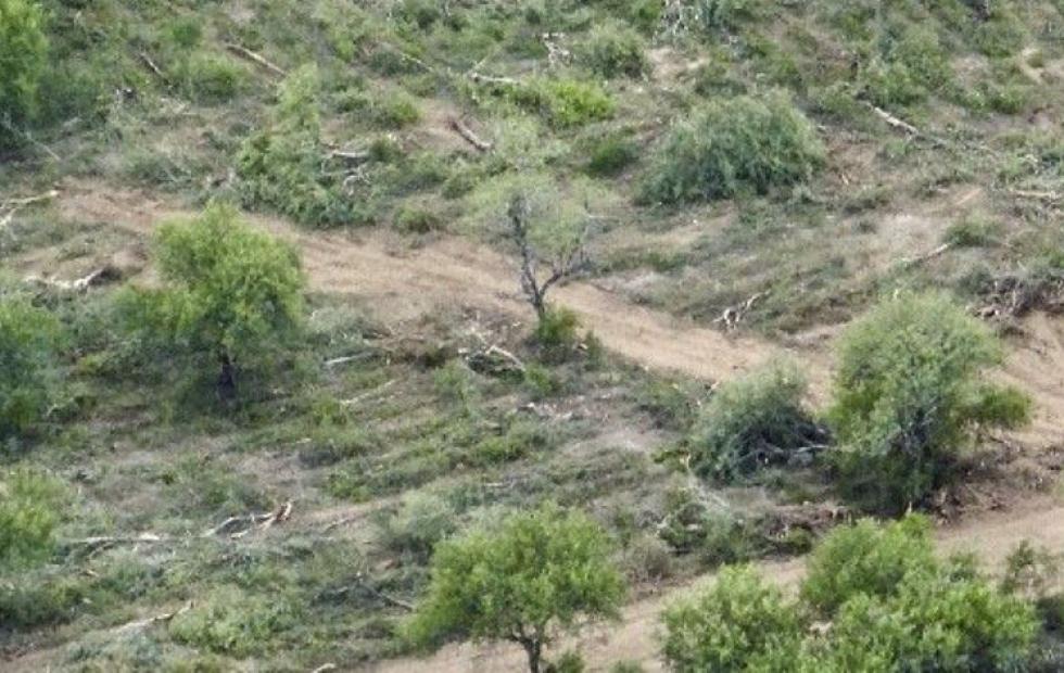 El Gran Chaco, una de las áreas más deforestadas a nivel mundial