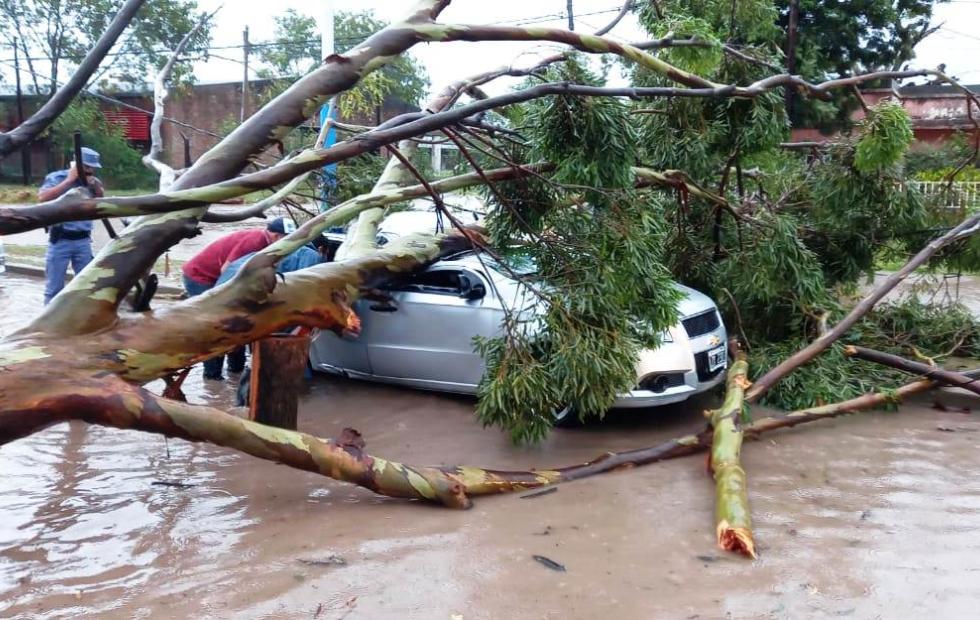 Un árbol cayó sobre un auto y  sus dos ocupantes terminaron heridas