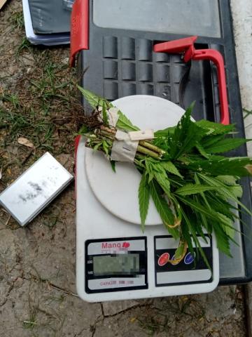 Secuestros plantines de marihuana III.jpg