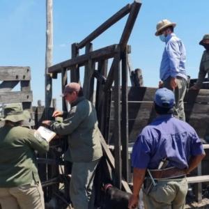 El robo de hacienda del siglo: se llevaron casi 2.000 animales de una estancia en Santa Fe