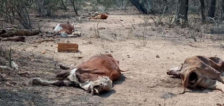 vaca 2.jpg