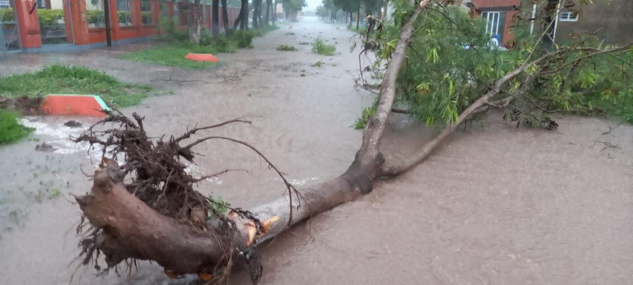 caida de arboles temporal en Perín.jpg
