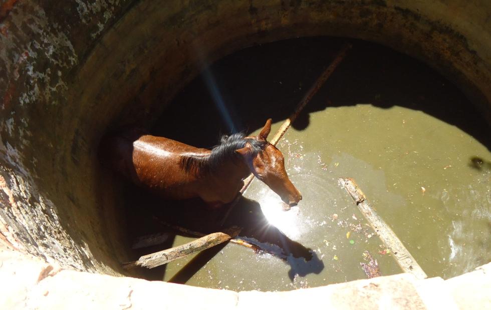 Rescatan un caballo que cayó a un aljibe
