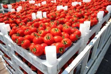 tomatesgenerico.jpg