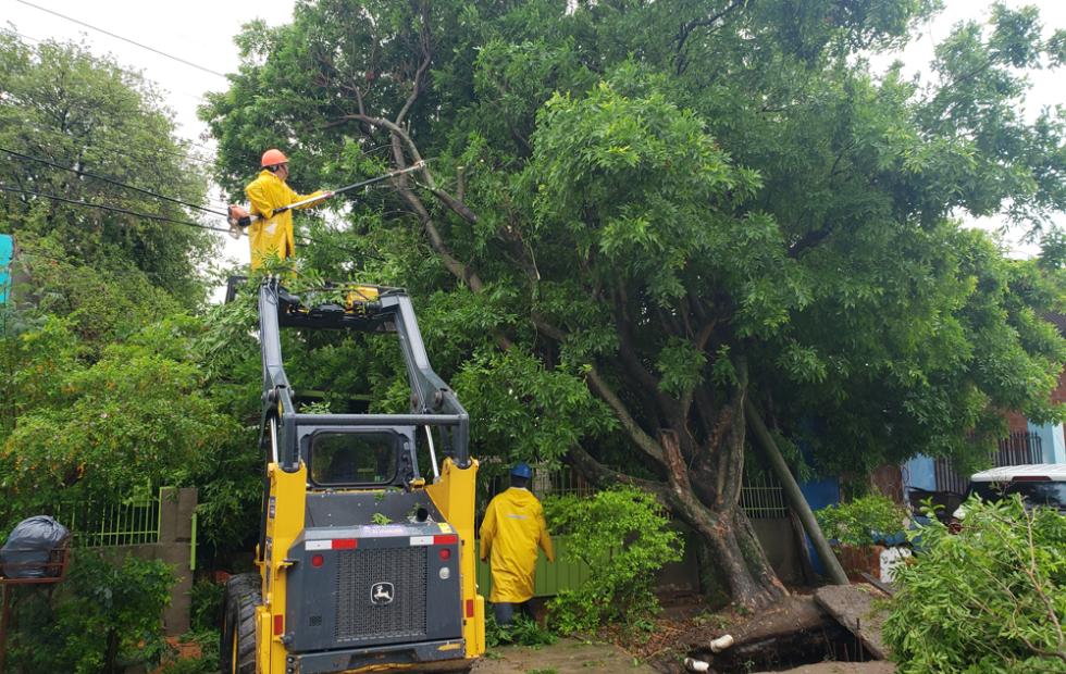 Caída de árboles y daños materiales en la ciudad de Clorinda